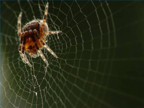 Las arañas comunes del medio oeste