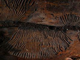 Los fósiles utilizados hasta la fecha Rocks