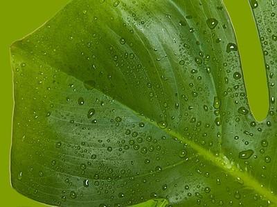 Estructuras celulares implicados en la fotosíntesis