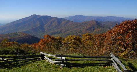Cómo identificar los árboles de roble de Virginia