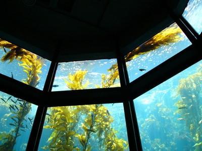 ¿Cómo hacen las plantas acuáticas absorben la contaminación?