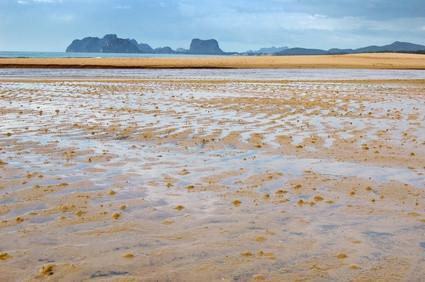 El Mudflat del Ecosistema