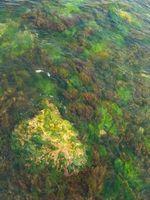 Características de algas