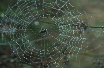 Las supersticiones comunes sobre las arañas