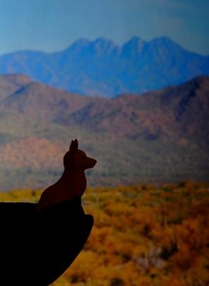 Mamíferos de los desiertos del suroeste