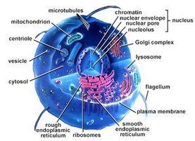 Definiciones de la estructura de la célula