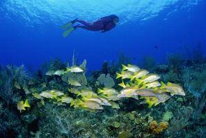 Los descubrimientos que Jacques Cousteau Hecho