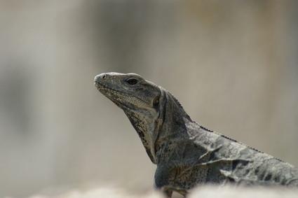 ¿Qué hace que los reptiles de sangre fría?
