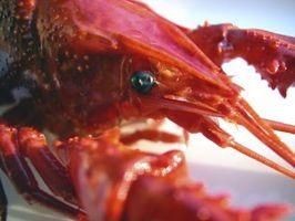 Cómo criar cangrejos en un acuario para la Alimentación