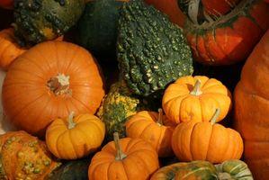 Festivales y ferias en el sur de Ontario en octubre