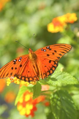 Hábitat para las mariposas