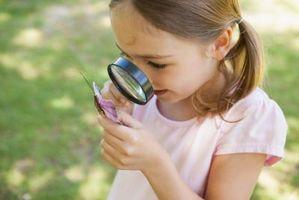 Las partes del cuerpo de los insectos para Niños