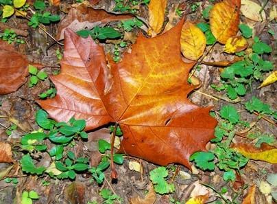 Cómo conservar las hojas con parafina