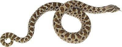 Las serpientes marrones en Mississippi