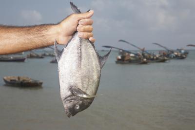 Lo que debe buscar en una lupa de pesca