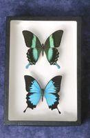 Las ideas de fondo para una colección de insectos