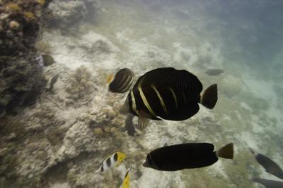 Las partes del cuerpo que ayudan al movimiento pez en el agua