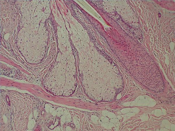Acerca de anatomía microscópica - Cusiritati.com