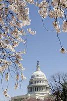¿Cuándo los cerezos Bloom en Washington DC?