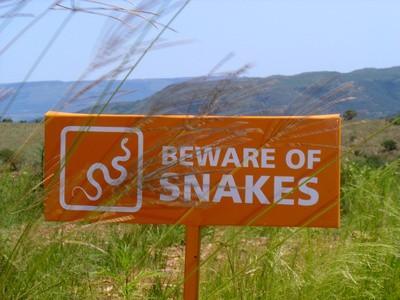 La identificación de serpientes con anillos blancos en Pennsylvania