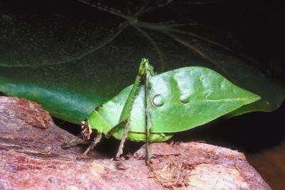 Dos tipos de ciclos de vida de los insectos