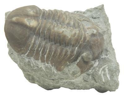 Cómo utilizar los fósiles para correlacionar las rocas