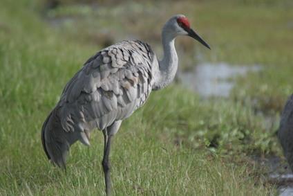 Las grandes aves que se encuentran en Texas