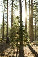 5 causas básicas de los problemas ambientales