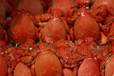 Mantener los cangrejos de comer a los peces en un acuario