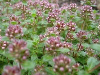 La identificación de plantas invasoras