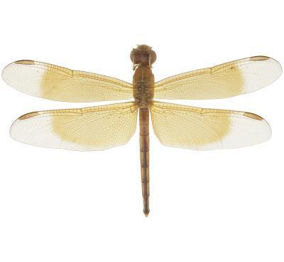 Cómo conservar los insectos para una colección de insectos
