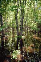 Los proyectos de los ecosistemas en un pantano