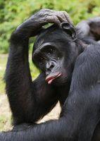 ¿Dónde viven los monos?