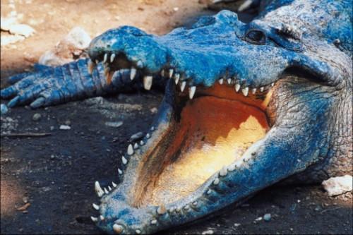 Actividades de cocodrilo temáticos para niños pequeños