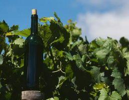 Datos sobre uvas de vino italiano