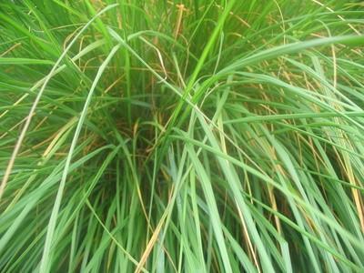 Los efectos de la Luz ultra violeta sobre el crecimiento vegetal