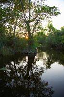 Cómo evaluar la salud del ecosistema