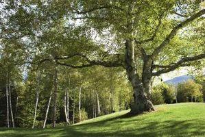 """Dónde encontrar los Duendecillos de la cosecha de """"Harvest Moon: El árbol de la tranquilidad"""""""