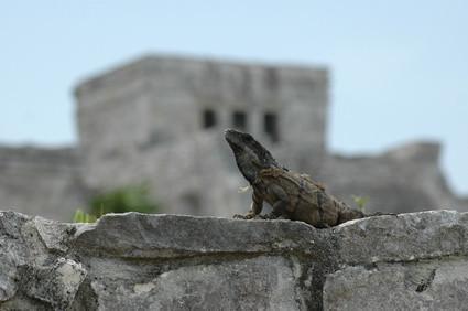 Importancia de los reptiles en el Ecosistema