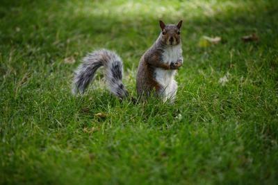 Cómo alimentar a las ardillas palomitas