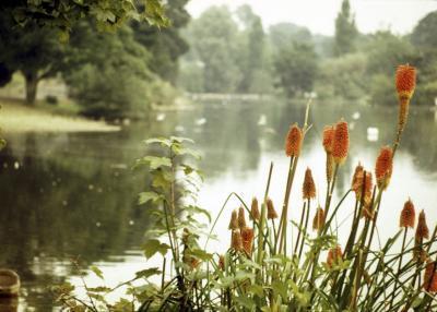 Factores que pueden provocar cambios a un ecosistema