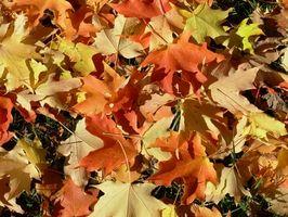 Cómo jugar en las hojas de otoño