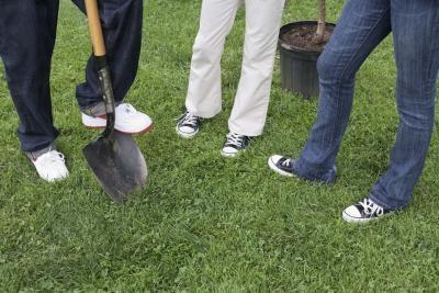 Cosas que una familia puede hacer por el Día del Árbol