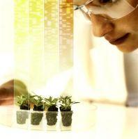 Los experimentos de crecimiento vegetal en la escuela secundaria