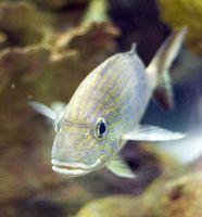 Se puede intercambiar una grava de acuario con los peces en el tanque?