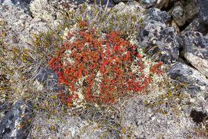 Cosas sobre la tundra del Ecosistema