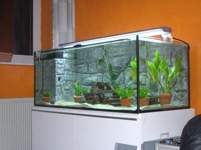Cómo Sifón de agua de los tanques de peces