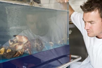 Cómo bajar Gravedad específica en un acuario