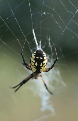 Cómo identificar las arañas por sus características