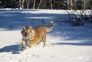 Razones económicas para salvar a las especies en peligro de extinción